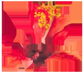 Yoyma